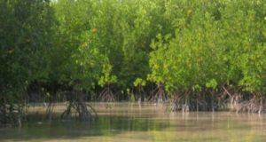 Mangrove Bagi Lingkungan Sekitar