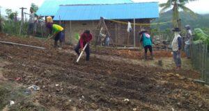 Tingkatkan Perekonomian, Desa Puulemo Ciptakan Kebun Covid-19